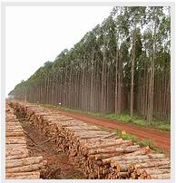 Monitoramento Florestal